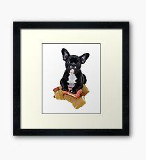 Cute English bulldog puppy Framed Print