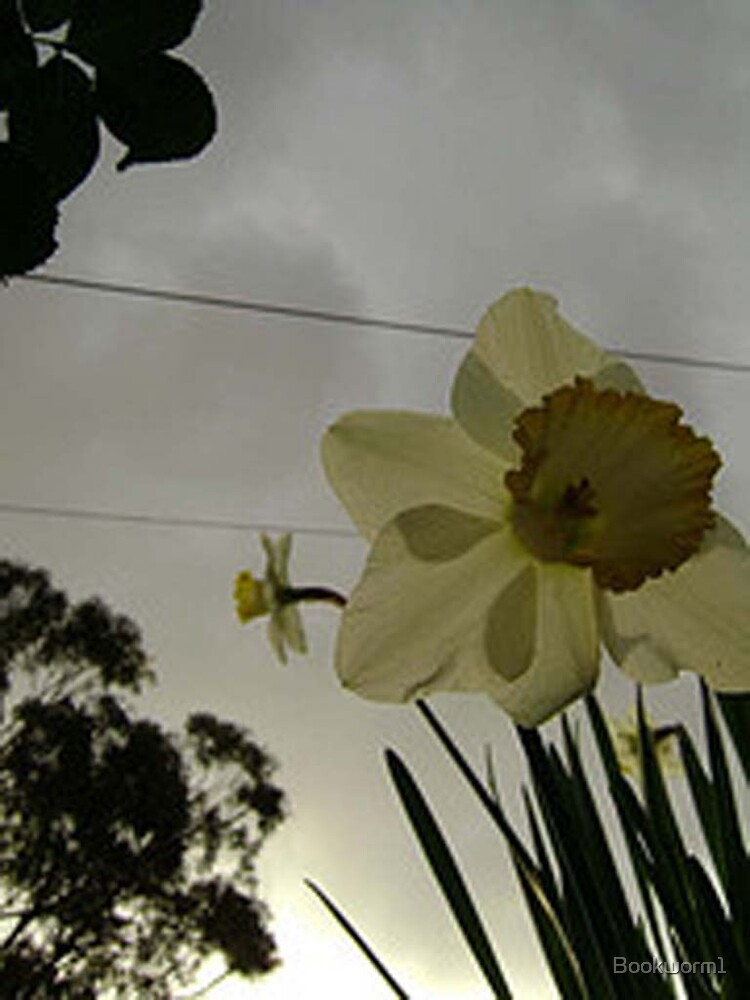Daffodil by Bookworm1