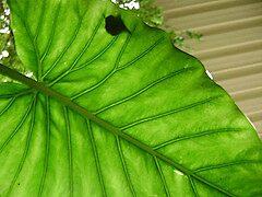 Underside of leaf by Bookworm1