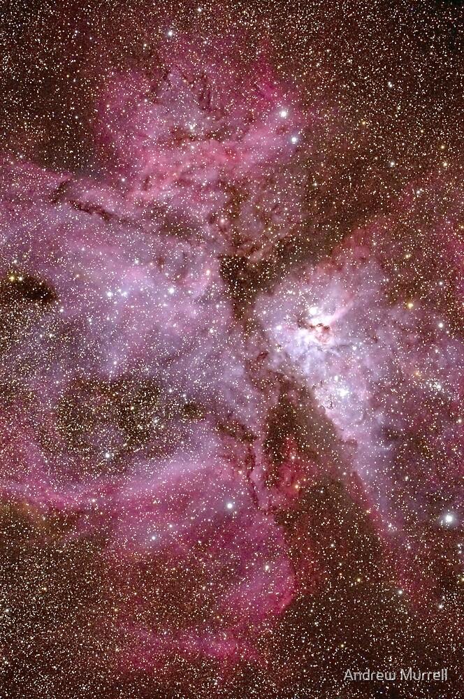 Stellar Nursery by Andrew Murrell