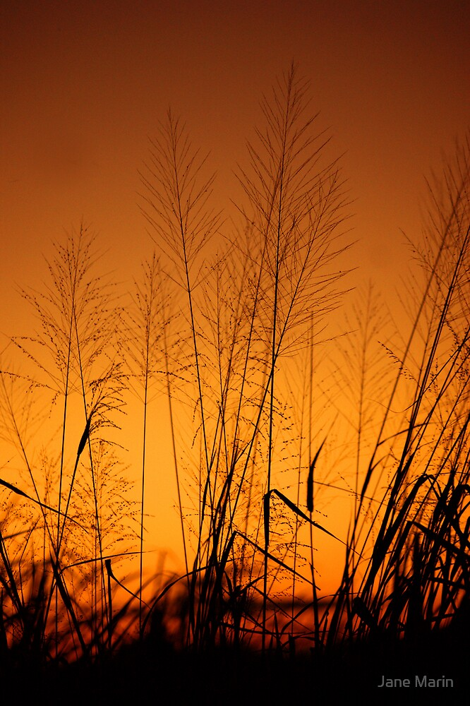 Grasses at Sunset by Jane Marin