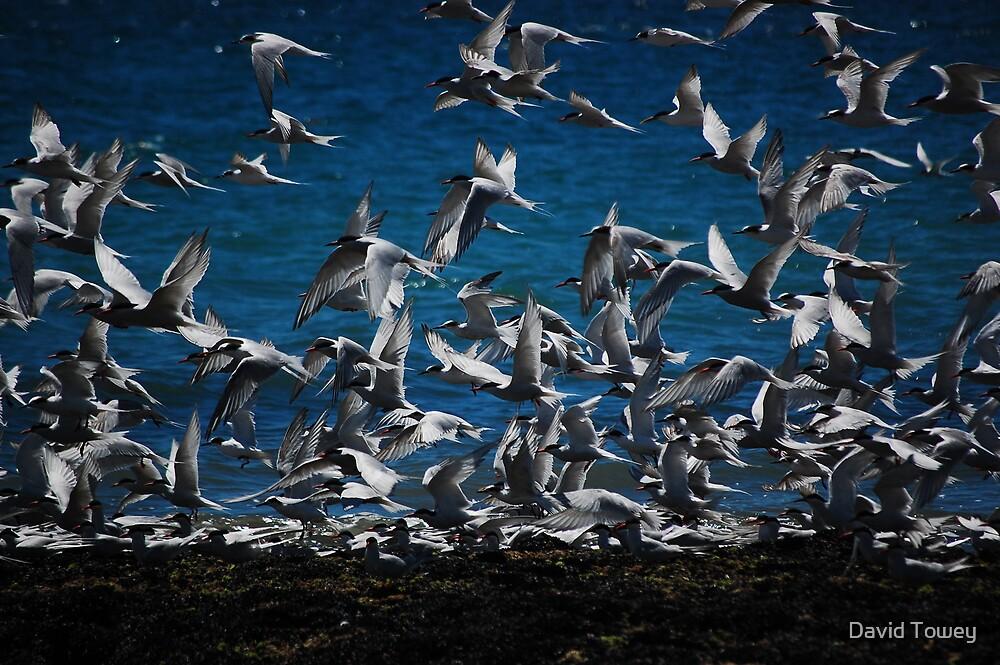 Take off by David Towey