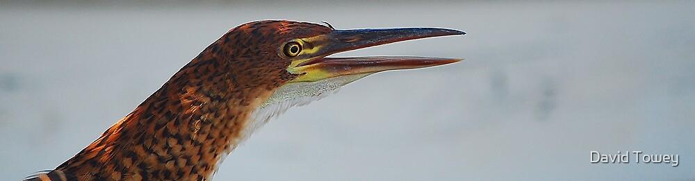 Tiger Heron Adult by David Towey