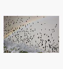 Rainbow Swarm Photographic Print