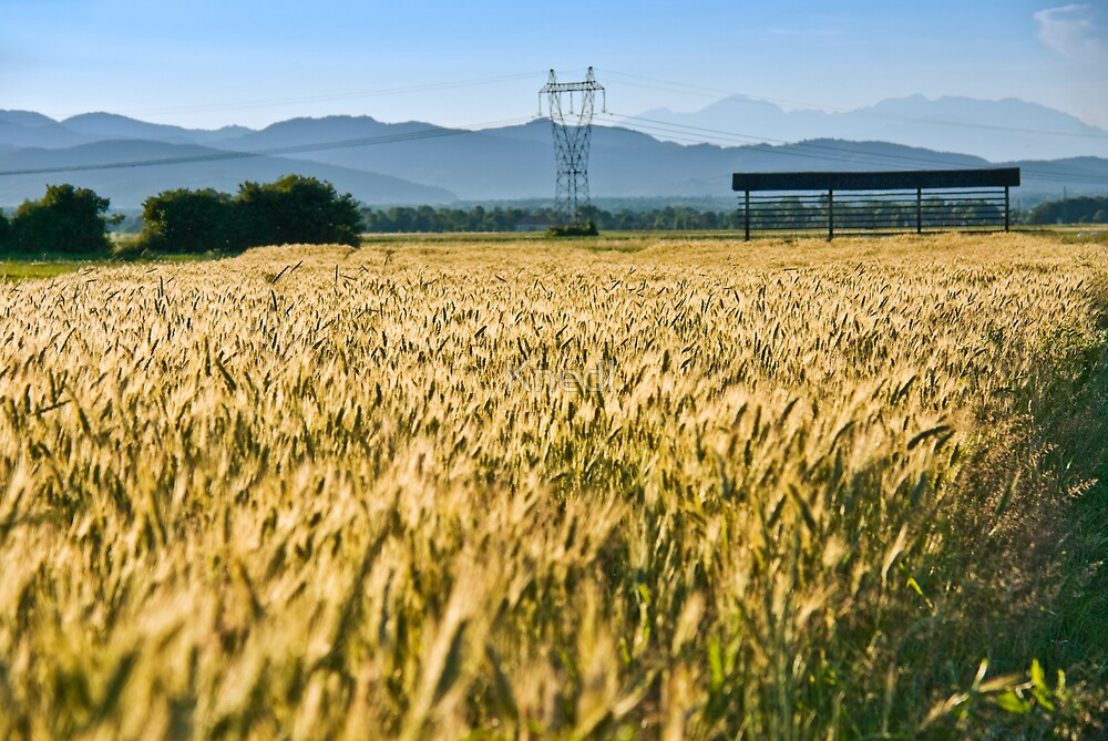 Electric Wheat Field by Knedl