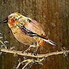 Sparrow Bird  by BasantSoni