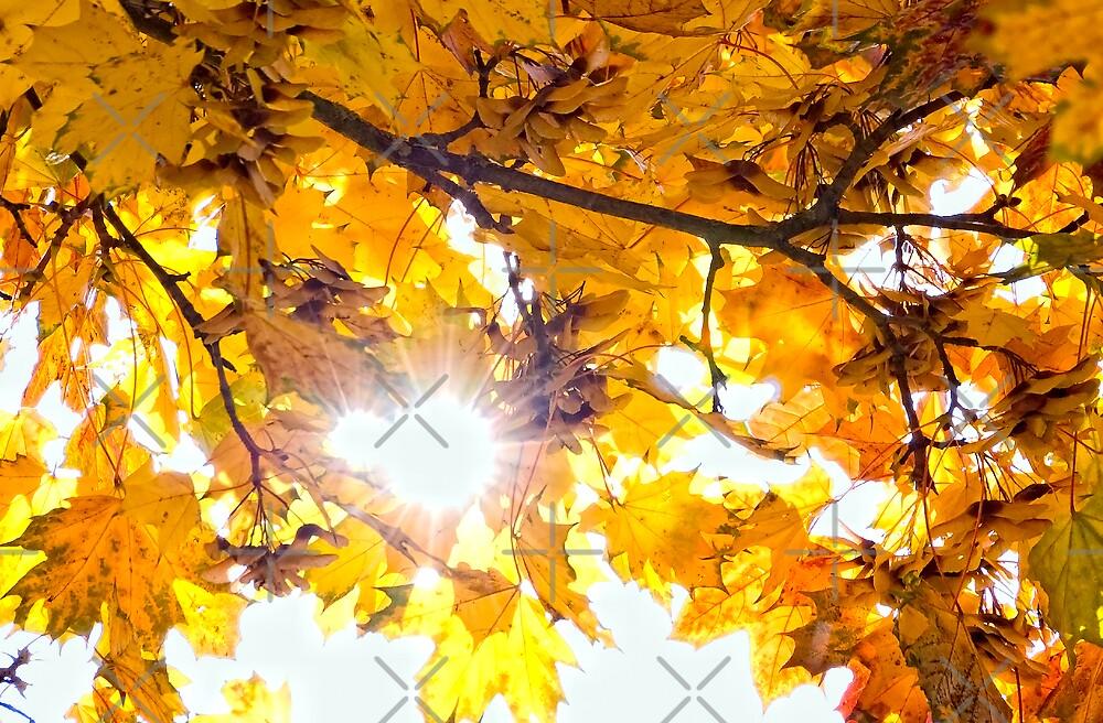 October Gold by Rainer Kuehnl