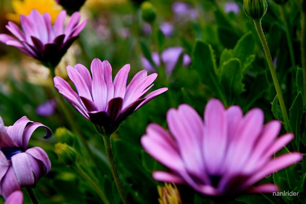 purple Purple by Nathaniel Arnold