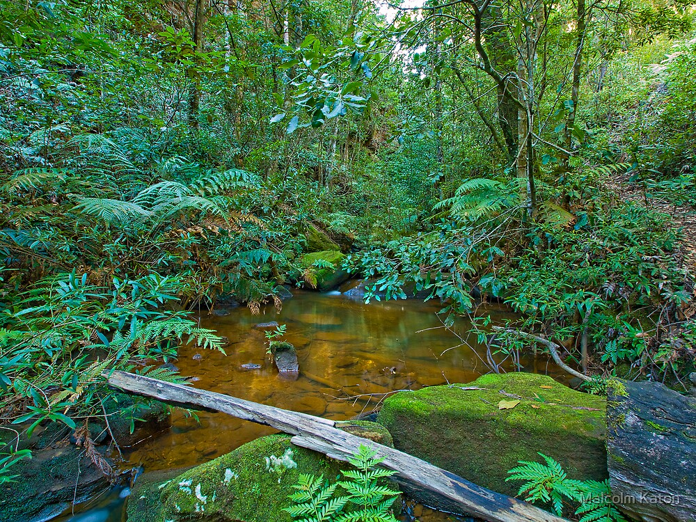 Mountain Stream - North Lawson, NSW by Malcolm Katon