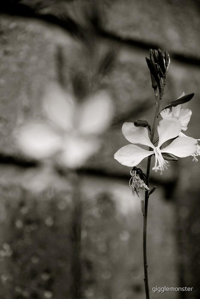Blossom by gigglemonster