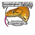 Radiated ratsnake - Coelognathus radiatus by HerpHighlights