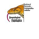 Radiated ratsnake - Coelognathus radiatus | Alternative by HerpHighlights