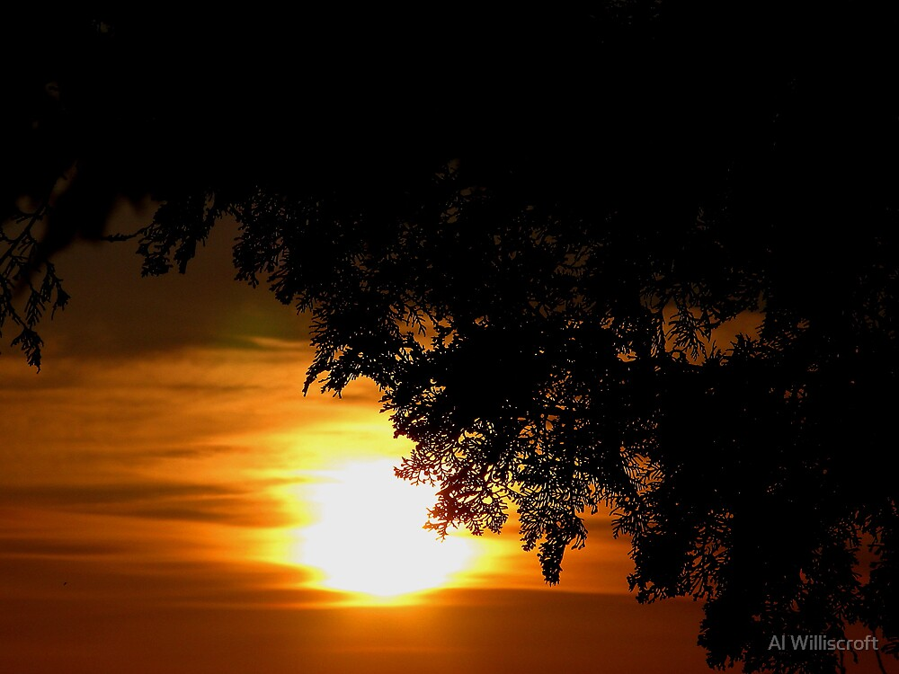 Sun and Tree by Al Williscroft