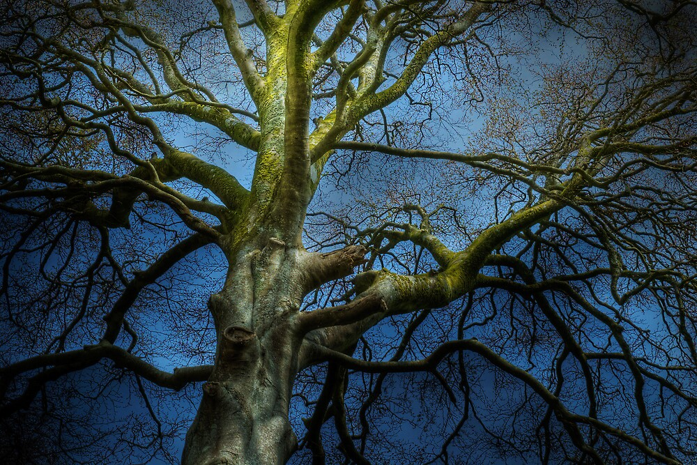 Beech Tree, Minterne Magna, Dorset, UK by WinfrithGraphic