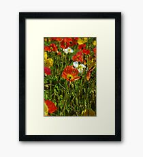 Californian Poppies Framed Print