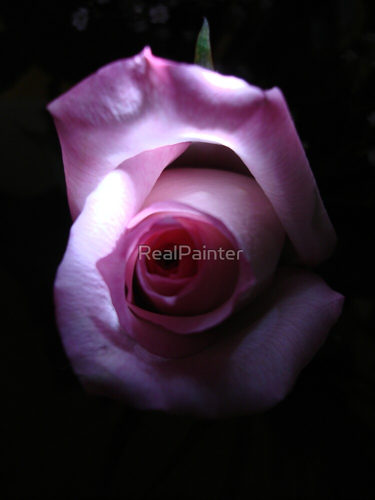 Eye of the Rose by RealPainter