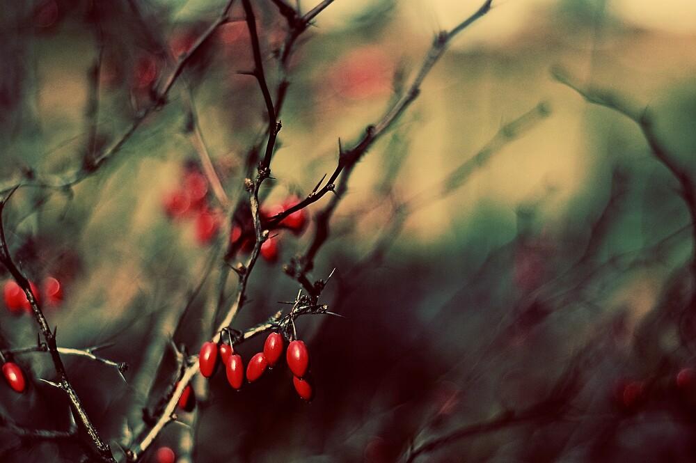 {season 'tis} by meg4m