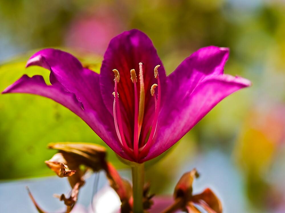 A Flower Anatomy Class. by David Platt-Chance