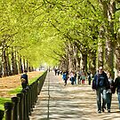 Green Park Buckingham Palace London by DonDavisUK