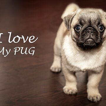 I love my pug by jonasscorpio