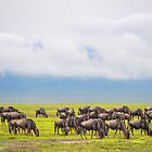 Tanzania. Ngorongoro Conservation Area. The Wildebeests. by vadim19
