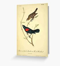 James Audubon Vector Rebuild - The Birds of America - From Drawings Made in the United States and Their Territories V 1-7 1840 - Red and Black Shouldered Marsh Blackbird Greeting Card