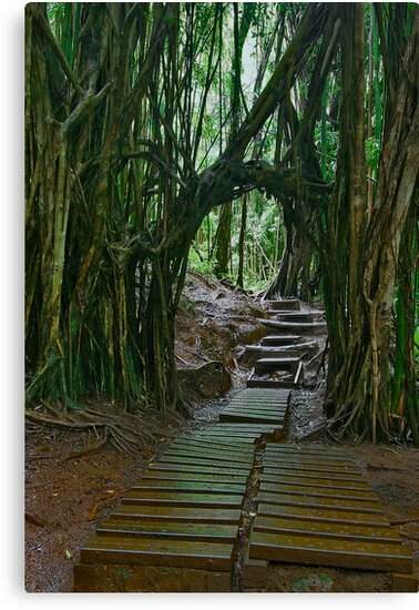 Doorway To The Enchanted Rain Forest by photosbyflood
