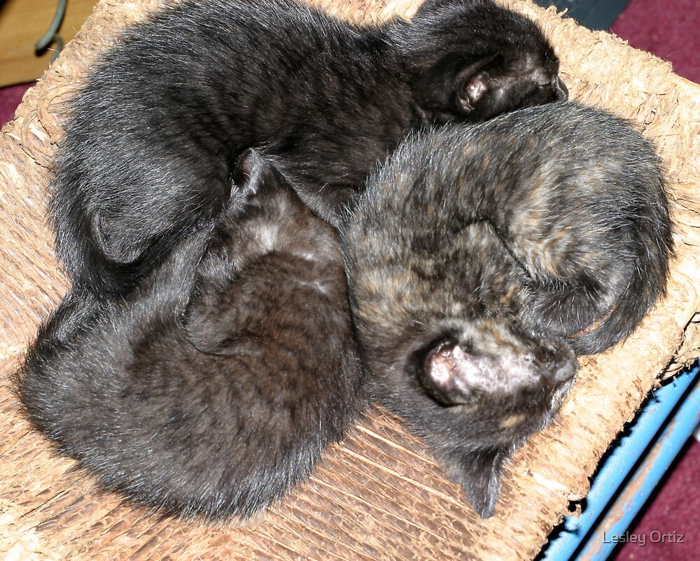 Kitty Pile by Lesley Ortiz