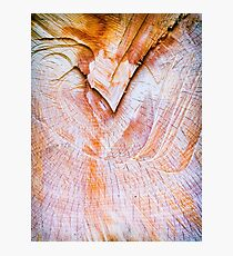 Tree trunk section close up Photographic Print