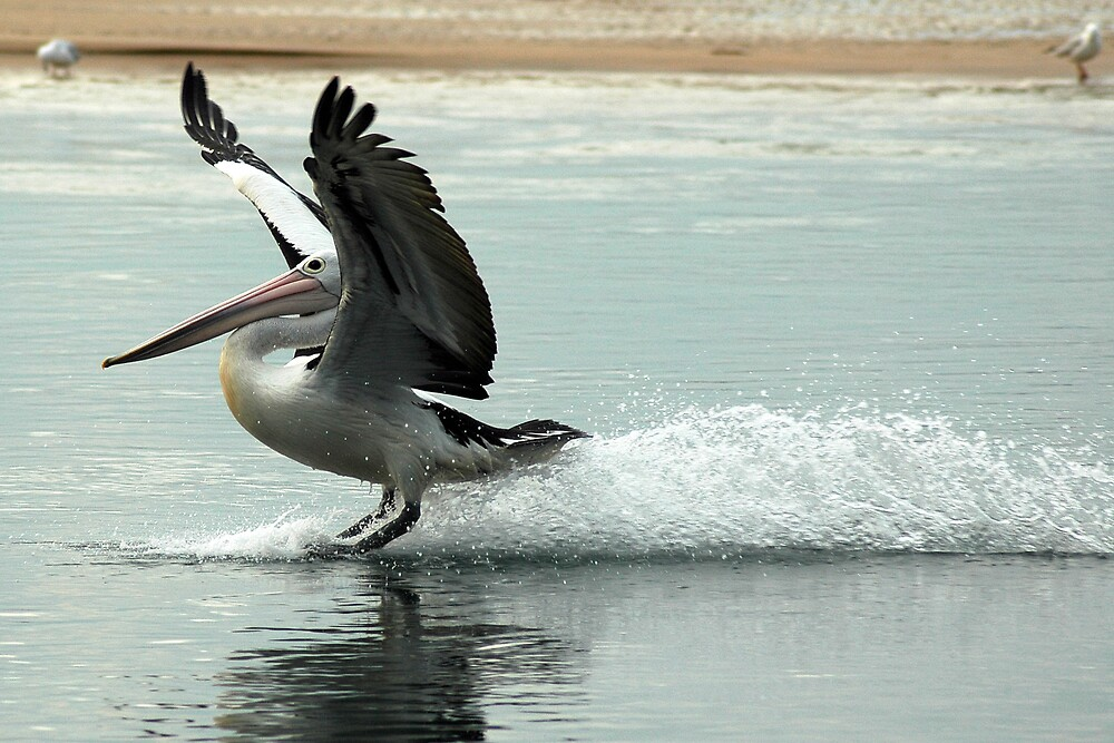 Water Skiing by Daniel Mitchell