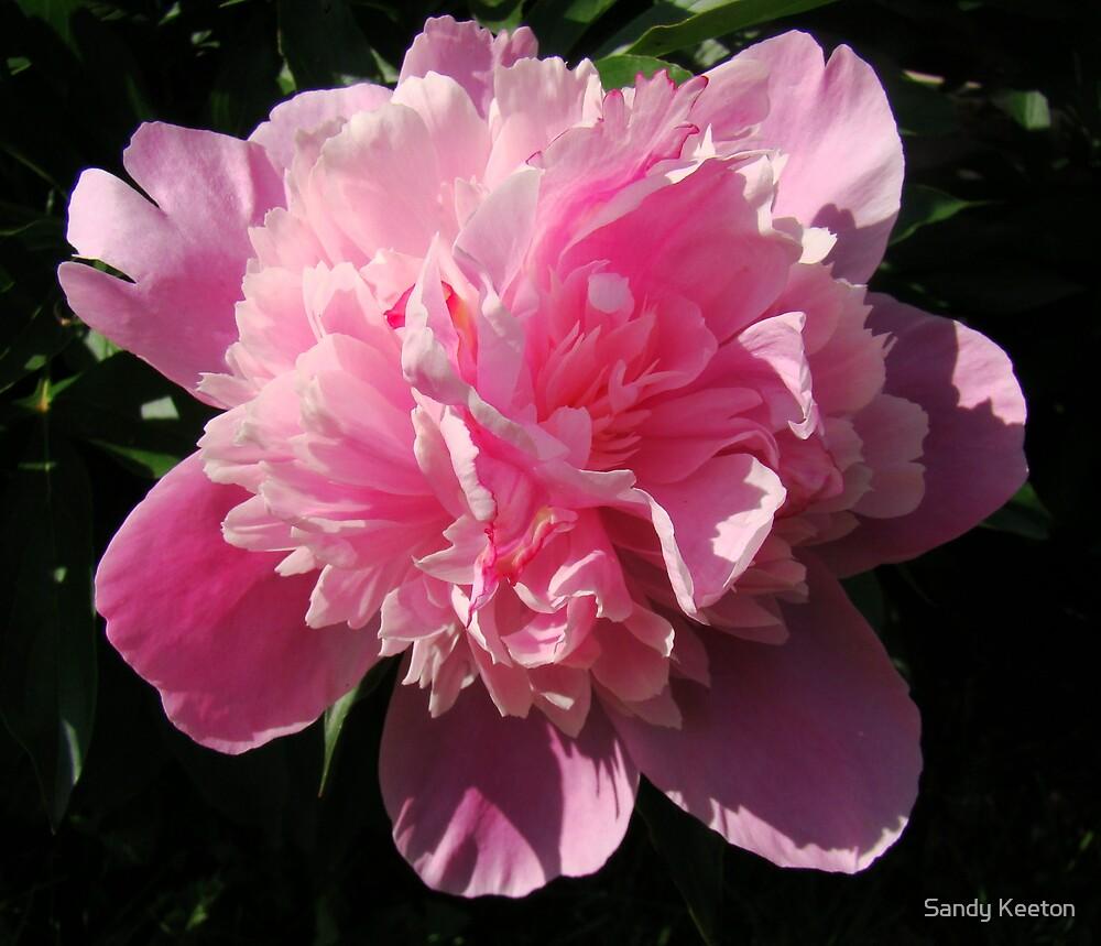 Pink Peony by Sandy Keeton