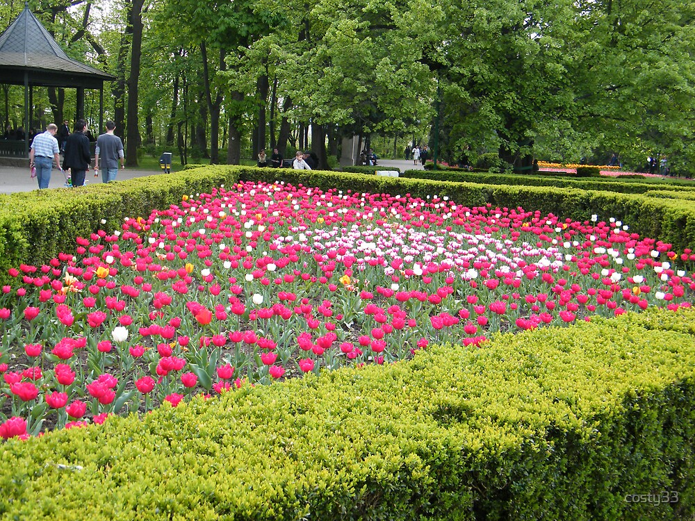 Triangle of tulips by costy33