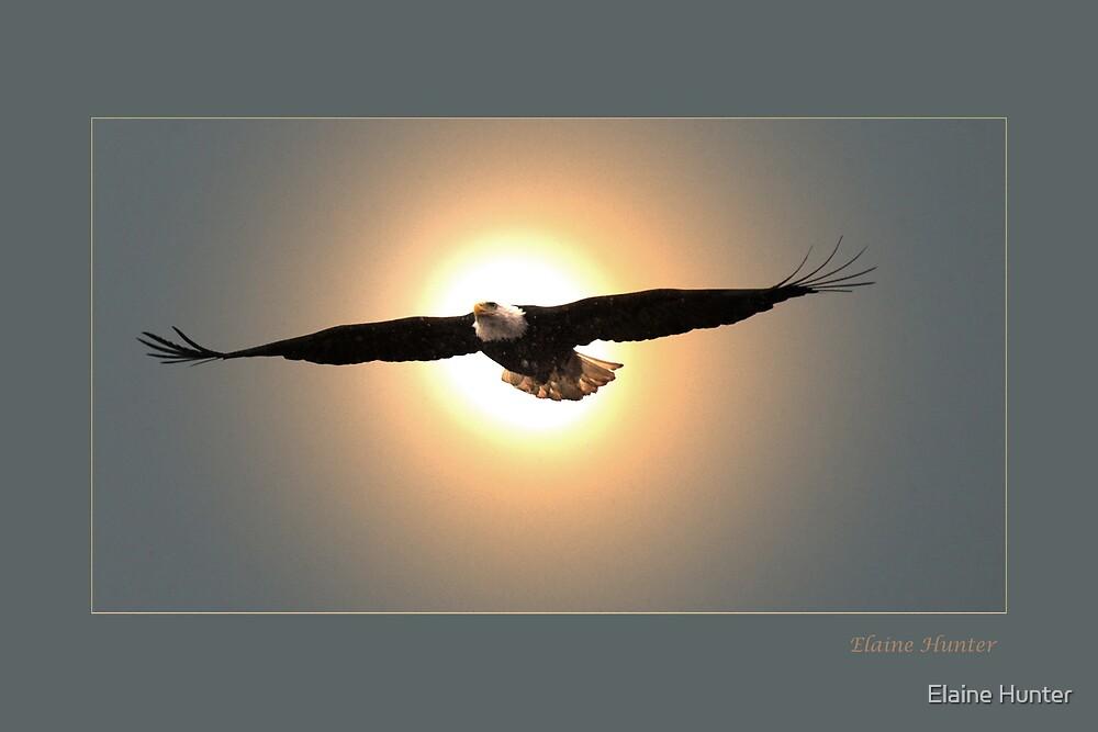 Eagle by Elaine Hunter