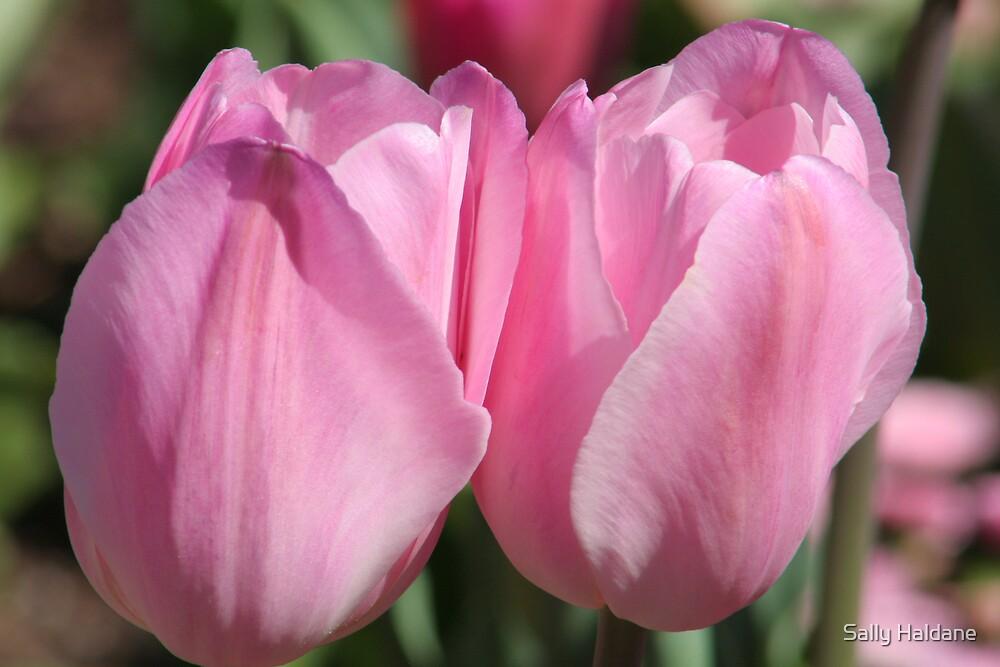 Pink Pair by Sally Haldane