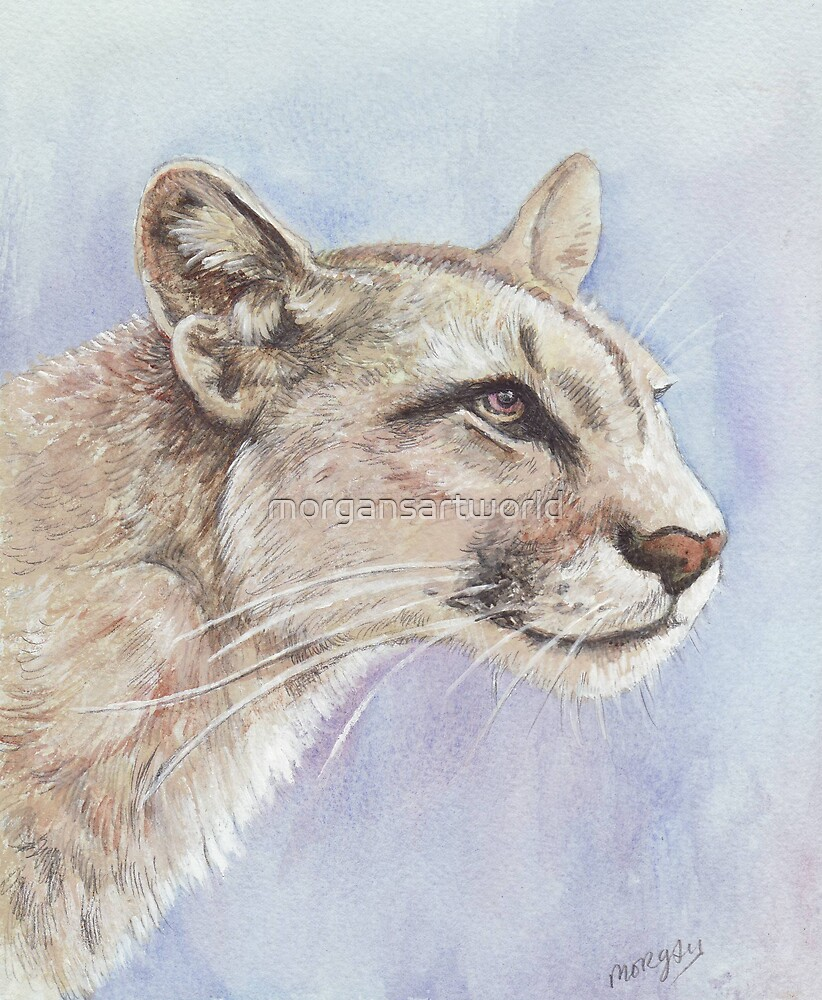 Mountain lion  by morgansartworld