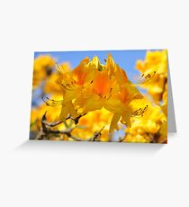 Yellow Rhododendron Flowers. Spring Pruhonice Park Greeting Card