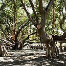 Banyan Tree by Teresa Zieba