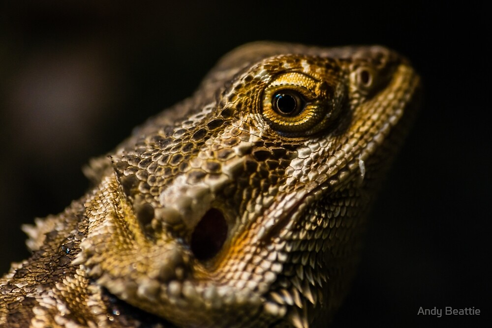 Bearded Dragon by Andy Beattie