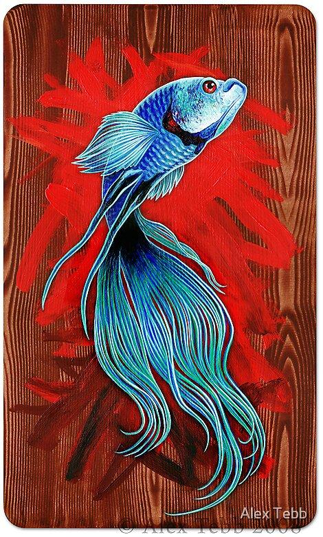 Blue Fighting Fish by Alex Tebb