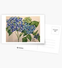 blue hydrangea blooms Postcards