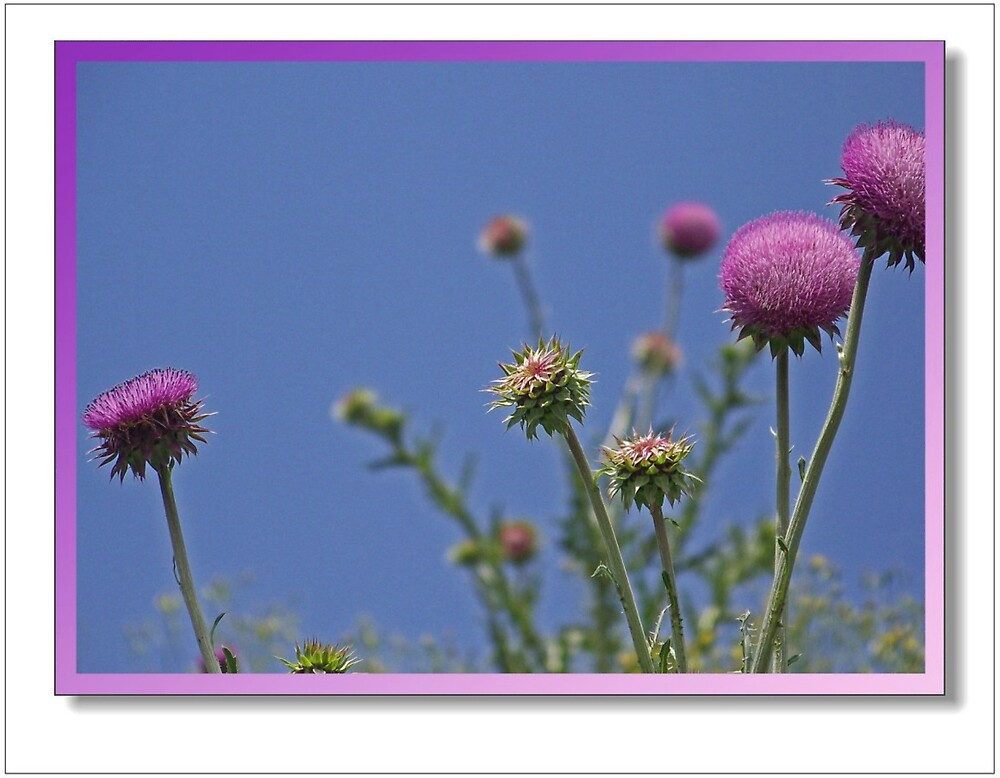 Wild Flowers by lynell