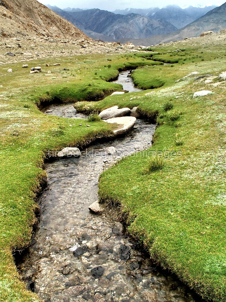 mountain stream. ladakh, india by tim buckley | bodhiimages