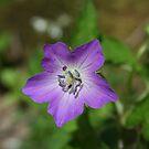 NC wild flower by Forrest Tainio
