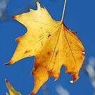 The Leaf by Catherine Davis