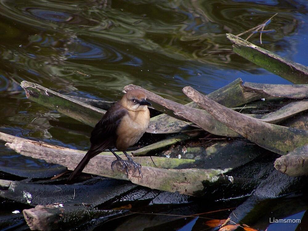 lil birdie by Liamsmom