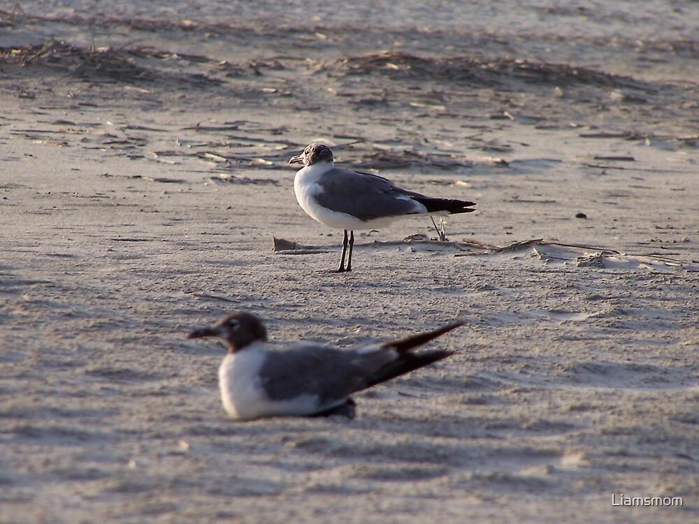 Someone say Seagulls by Liamsmom