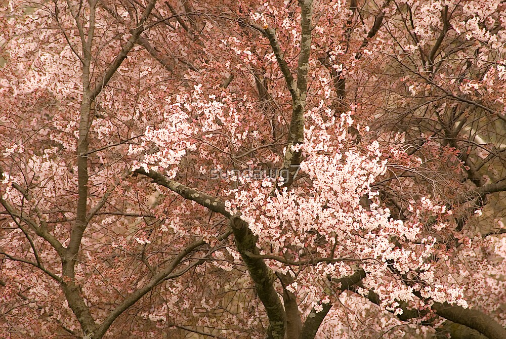Blossom Clusters by sundawg7