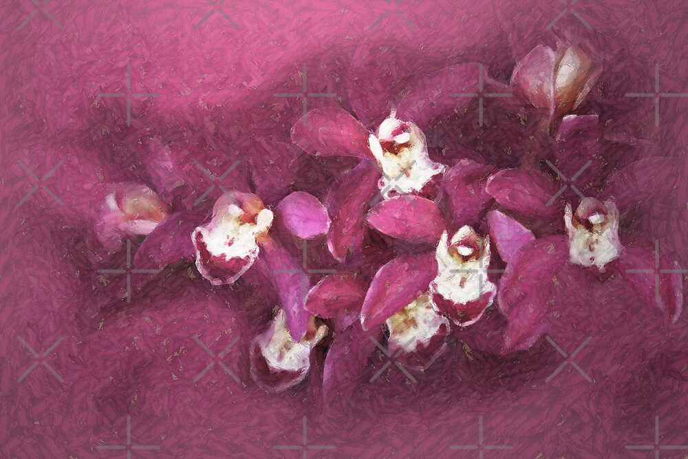Orchids by CarolM