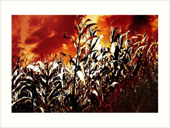 Fire in the corn field by Gaspar Avila