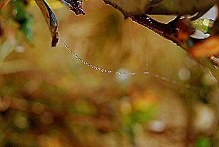 Morning Dew by Angie  Bailey